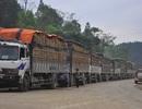Cả ngàn xe hàng nông sản ách tắc tại cửa khẩu Tân Thanh