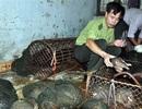 Bán đấu giá động vật hoang dã được phát hiện, bắt giữ trên xe Camry