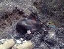 Khẩn trương điều tra, làm rõ vụ xác người cháy đen tại TP Hòa Bình