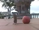 Lạ lùng chú chuột chắp tay vái lạy Phật lia lịa!