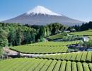 Chia sẻ kinh nghiệm tự xin visa ngắn hạn đến Nhật