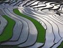 """""""Ngẩn ngơ"""" với ruộng bậc thang Sa Pa vào mùa nước đổ"""