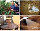 """Cà phê """"sinh thái"""" – Đỉnh cao mới của cà phê """"sạch"""""""