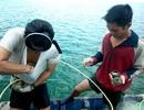 Bảo vệ vùng biển có cổ vật để khảo sát