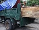 Xử lý kỷ luật Hạt trưởng Hạt kiểm lâm mua gỗ trái phép