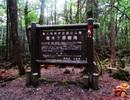"""Rùng rợn ghé thăm """"khu rừng tự sát"""" ở Nhật Bản"""