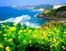 Đảo Jeju - thiên đường tình yêu vĩnh cửu
