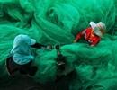 """""""May lưới đánh cá"""" đạt giải nhất cuộc thi ảnh quốc tế"""