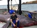 Cá mập khủng tái xuất sau gần một thế kỷ