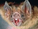 """""""Rợn người"""" với 10 sinh vật hoang dã kỳ dị nhất thế giới"""
