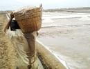 Giọt mồ hôi rơi trên ruộng muối