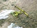 Tiêu diệt 116 con rắn lục đuôi đỏ, 6 người bị rắn cắn