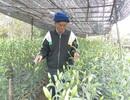 Cựu chiến binh tiên phong trồng hoa trên đất nhiễm mặn