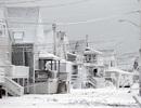 Bão tuyết không mạnh như dự báo, dân New York bực chính quyền