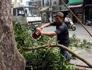 """Chủ tịch Hà Nội: Không có chuyện """"kiếm chác"""" trong việc thay thế cây xanh"""