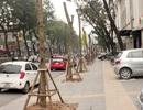 """Hàng cây """"không hắt bóng"""" trên các tuyến phố Hà Nội"""