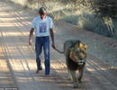 11 năm làm bạn bên sư tử