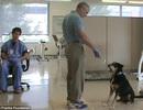 Chú chó ngửi ra được bệnh ung thư