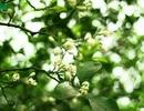 Tháng Tư hát khúc giao mùa