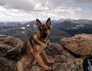 Chó cứu chủ khỏi chết vì sét đánh
