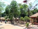 Hơn 6,4m3 gỗ lậu xuất hiện trong di tích quốc gia