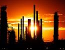 """""""Siêu dự án"""" lọc dầu 27 tỷ USD đã bắt đầu """"động đậy"""""""
