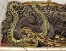 Người đàn ông sống chung với gần 50 con rắn