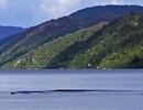 Quay được video về quái vật hồ Loch Ness?
