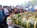Dâng cặp bánh chưng nặng 700kg tri ân thân mẫu Chủ tịch Hồ Chí Minh