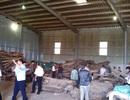 Không đủ yếu tố cấu thành tội buôn lậu trong vụ lô hàng gỗ ở cảng Tiên Sa