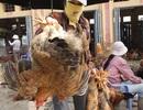 Hàng loạt thực phẩm trên thị trường nhiễm hóa chất, kháng sinh nặng