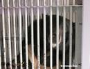Giao nộp cá thể gấu nuôi nhốt cuối cùng của tỉnh Bình Thuận