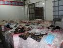 """Hơn 1,6 tấn thịt trâu, bò bốc mùi """"suýt"""" qua cửa ngõ Sài Gòn"""