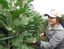 Sinh viên làm nông kiếm thêm mùa Tết
