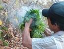 Cánh báo nguy cơ cháy rừng từ mùa lễ hội