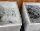 Bắt quả tang tôm đông lạnh bị bơm tạp chất ở Hà Nội