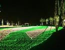 TPHCM: Tái hiện 4 mùa bằng 500 ngàn bóng đèn