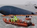 Tổng Thống Hàn Quốc rơi lệ, xin lỗi nhân dân về vụ chìm phà