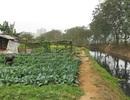 Rau trồng bằng nước cực bẩn, chỉ bán chứ không ăn!