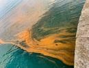 """Vùng biển nước Anh đổi màu, """"đốt cháy"""" da người bơi"""