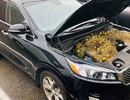 Nắp ca-pô khét lẹt vì hàng trăm quả óc chó và cỏ khô