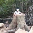 """Hàng nghìn hecta rừng tại Gia Lai """"tan biến"""" do đâu?"""