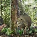 47 triệu năm trước những con ngựa có kích thước chỉ bằng một con chó