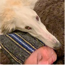 Chú chó đáng yêu có mõm siêu dài thu hút cư dân mạng
