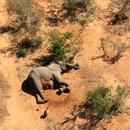 Bí ẩn hàng trăm con voi chết gần hồ nước