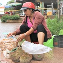 Đắk Nông: Kiếm nửa triệu đồng mỗi ngày nhờ mua thứ hạt ...bỏ đi