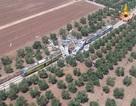 Ý: Tàu hỏa đâm nhau trực diện, 25 người chết, 50 người bị thương