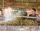 Lùng mua cau non, sấy khô bán cho Trung Quốc