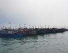 Hơn 200 khách du lịch mắc kẹt tại đảo Lý Sơn