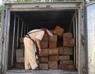 Bắt xe đông lạnh chở gỗ lậu quý hiếm